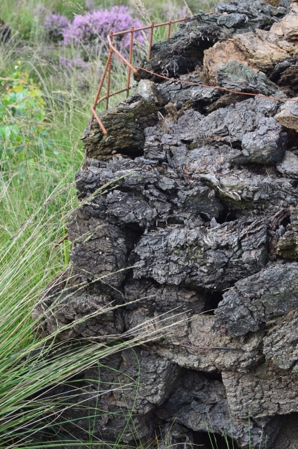 Torfwerk Moorkultur fot. S. Turowska